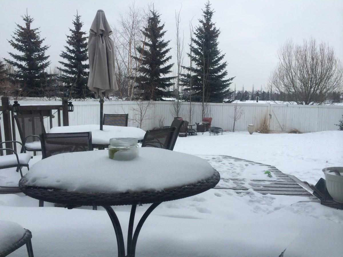 Springtime in Edmonton